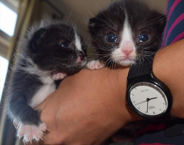 kittens-opening-eyes_r