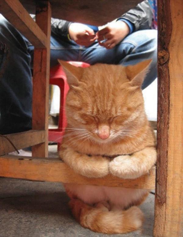 sitting_r