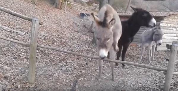 donkey_3_r