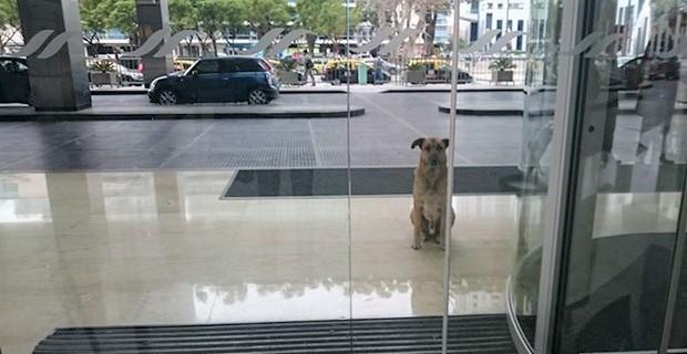 画像 ドイツ人CAに恋をしたアルゼンチンの野良犬。ホテル前で6ヶ月も待ち続けた末に?