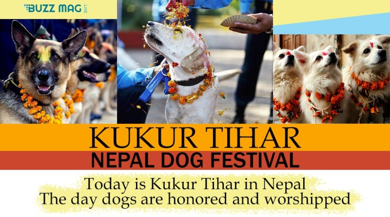 Dog Worshiping Festival KUKUR TIHAR