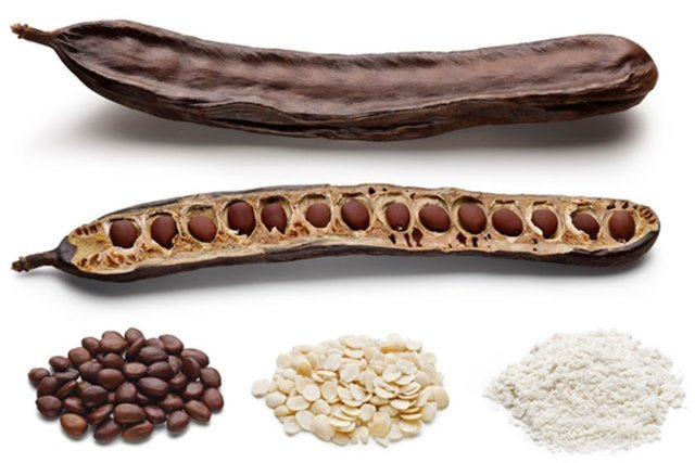 locust bean1