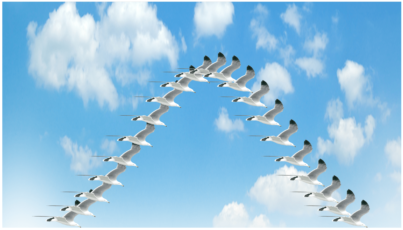a normal distribution with a common gull as a marker and sky as the background