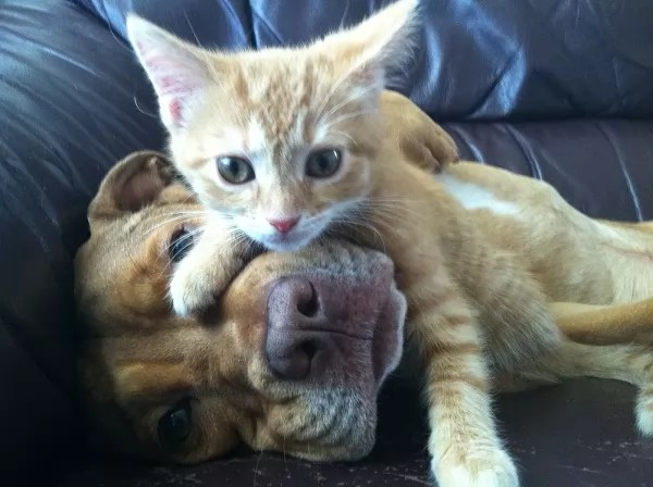 Cats And Dogs Can Breed