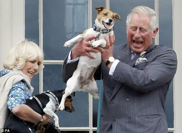 10 Celebrities With Jack Russells