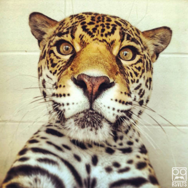 Animals-Taking-Selfies-44-of-50-630x630
