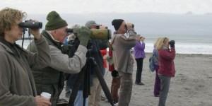 frontheader-beach-birding