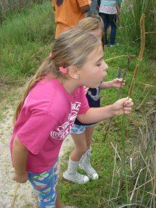 Summer Camp 2016 blowing away catthail seeds