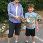 summer camp 2016 learning about pine cones