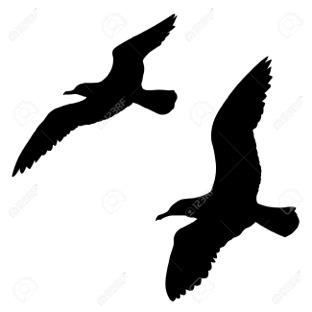 silhouette-gulls