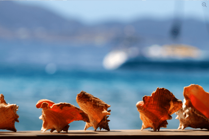 Cooper Island BVI Conch