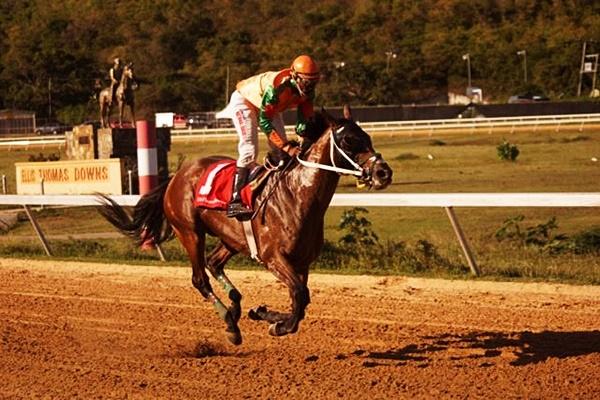 horse-racing-n
