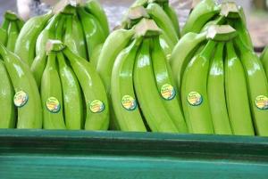 Бананалардың ұзақ сақтаудың негізгі принциптері