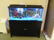 Blue Valley Nursing Home Fish Tank | Nebraska Nursing Care Homes