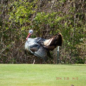 Turkeys Golf Top INT