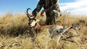 What great Mass this Pronghorn!  It is all about the Mass!