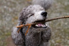 This is MY stick!