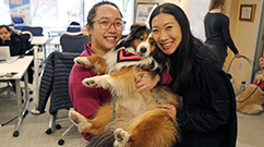 therapy dogs at the brigham