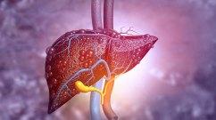 Illustration of liver