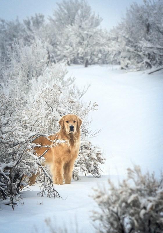 snowdogs_122113_0064