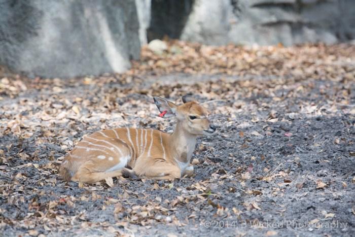 2014 Egg Safari at Zoo Miami - April 20, 2014 00013