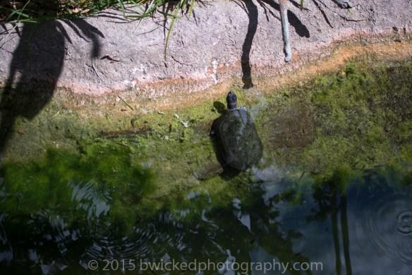2015 Dino Egg Safari-3057