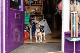 Someone's dog by Birmingham photographer Barry Robinson