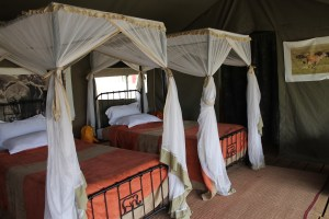 Camping Safari, 5 Days