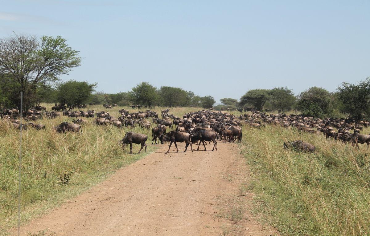 Wildebeest Migration Safari, 4 Days
