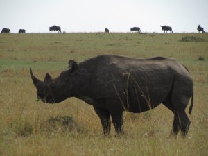 Tanzania Northern Camping Safari
