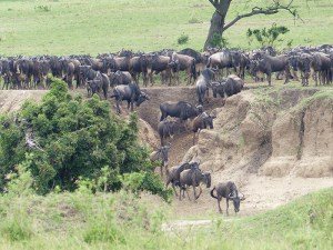 4 Days Wildebeest Migration Safari