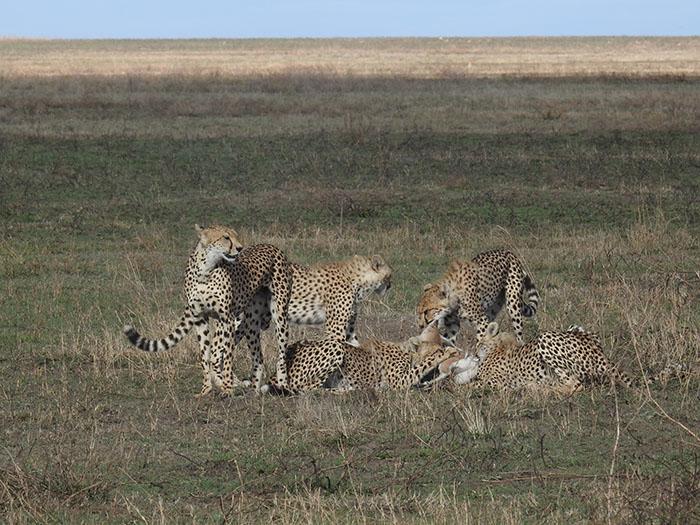 Tarangire National Parks Safari