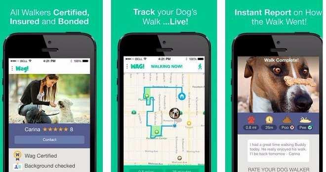 Wag dog walking jobs