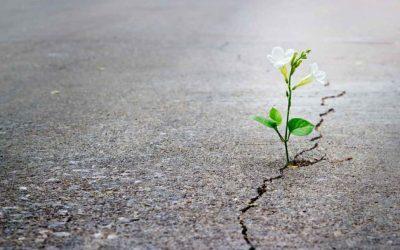 Om met hoop te leef