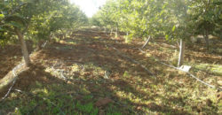 Land for Sale Aaqoura ( Laqlouq ) Jbeil Area 1825Sqm