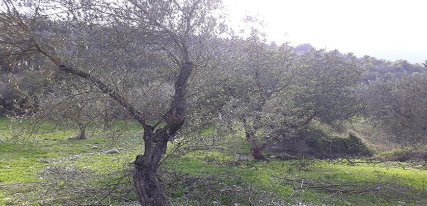 Land for Sale Ain Kfaa Jbeil Area 512Sqm