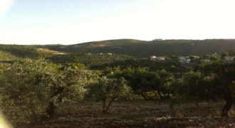 Land for Sale Ain Kfaa Jbeil Area 1645Sqm