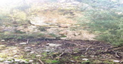 Land for Sale Hardine – Beit Kassab Batroun Area 1461Sqm