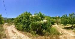 Land for Sale Chabtine Batroun Area 1004Sqm