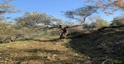 Land for Sale Ghalboun Jbeil Area 11800Sqm