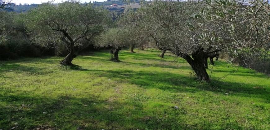 Land for sale Ain kfaa Jbeil Area 6400Sqm