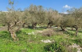 Land for Sale Ain Kfaa Jbeil Area 1300Sqm