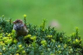 bird on bush