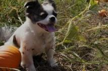 Francie and pumpkin