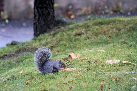 Squirrels love pizza