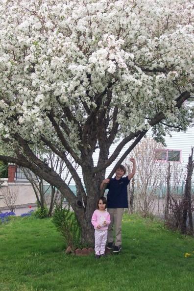 Kids by tree