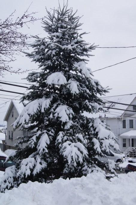 Snow 7