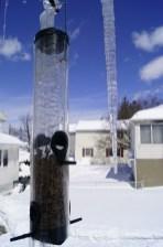 Icy birdfeeder 2