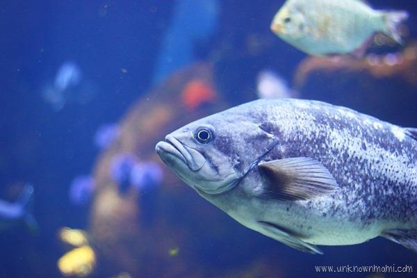 Aquarium at California Academy of Sciences