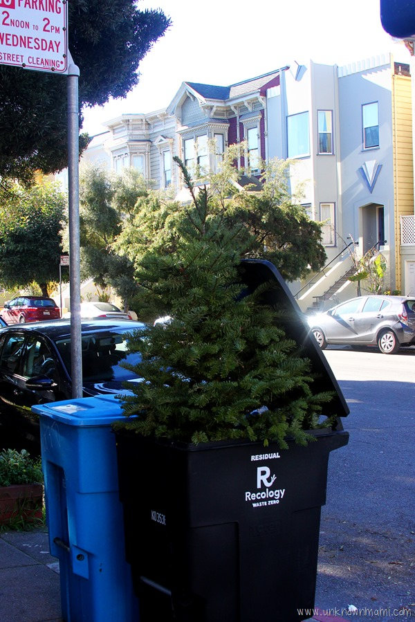 Christmas tree in garbage can